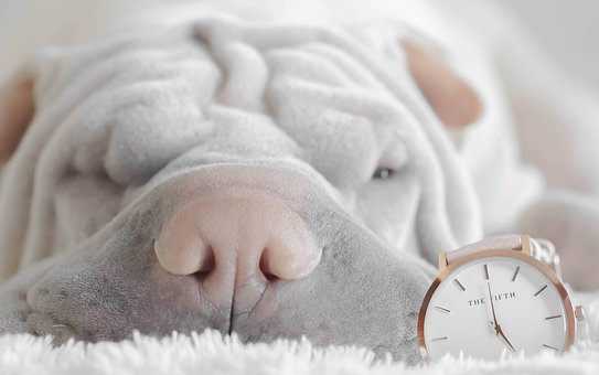 We only wish we could sleep like our dogs, find a dentist