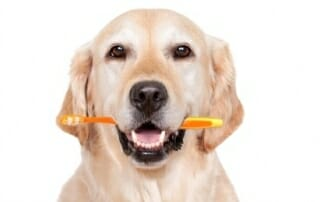 golden-retriever-with-toothbrush